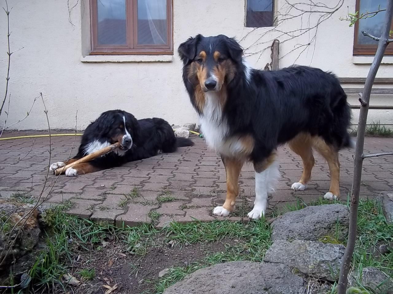 pension familiale pour chien puy dome